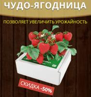 Где купить в Пензе ягодницу клубники
