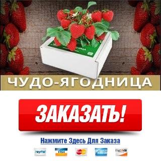 Чудо ягодница Сказочный Сбор купить в Соликамске