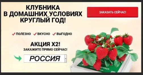 Чудо ягодница Сказочный Сбор купить в Нижнем Тагиле