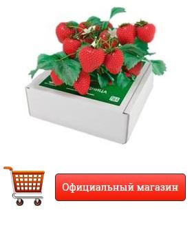 Как заказать Чудо ягодница Сказочный Сбор купить в Соликамске