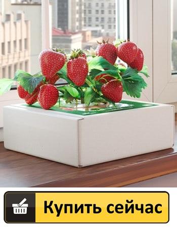Как заказать Где купить в Пензе ягодницу клубники